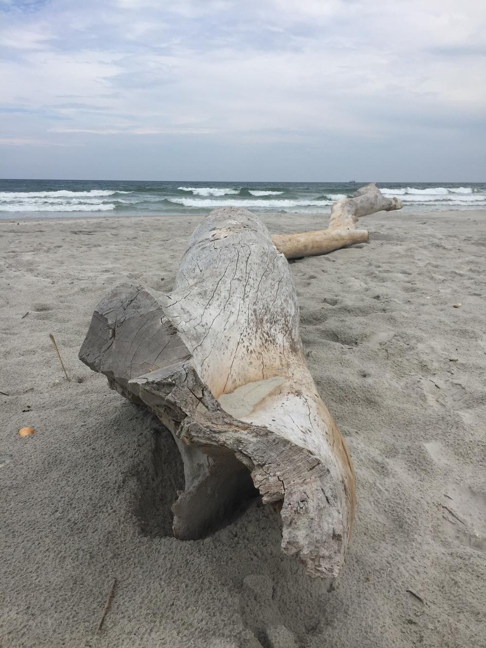 said driftwood