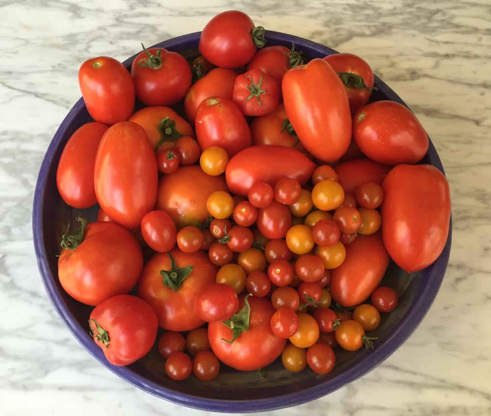 Whole bunch o' toms; cold tomato soup (bottom left); caprese salad (bottom right)