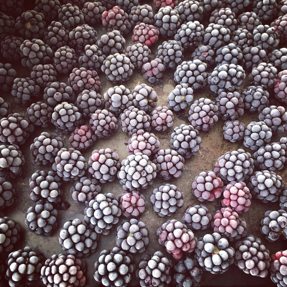 picked and quickly frozen blackberries- beautiful!