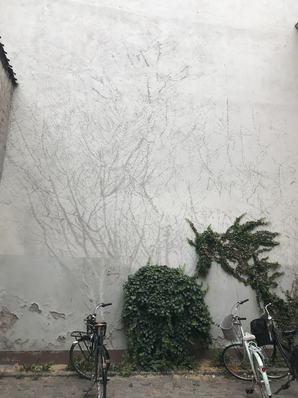 On a wall outside the Danish Design Museum: what remains after some of the ivy was stripped from the wall. I just love this.