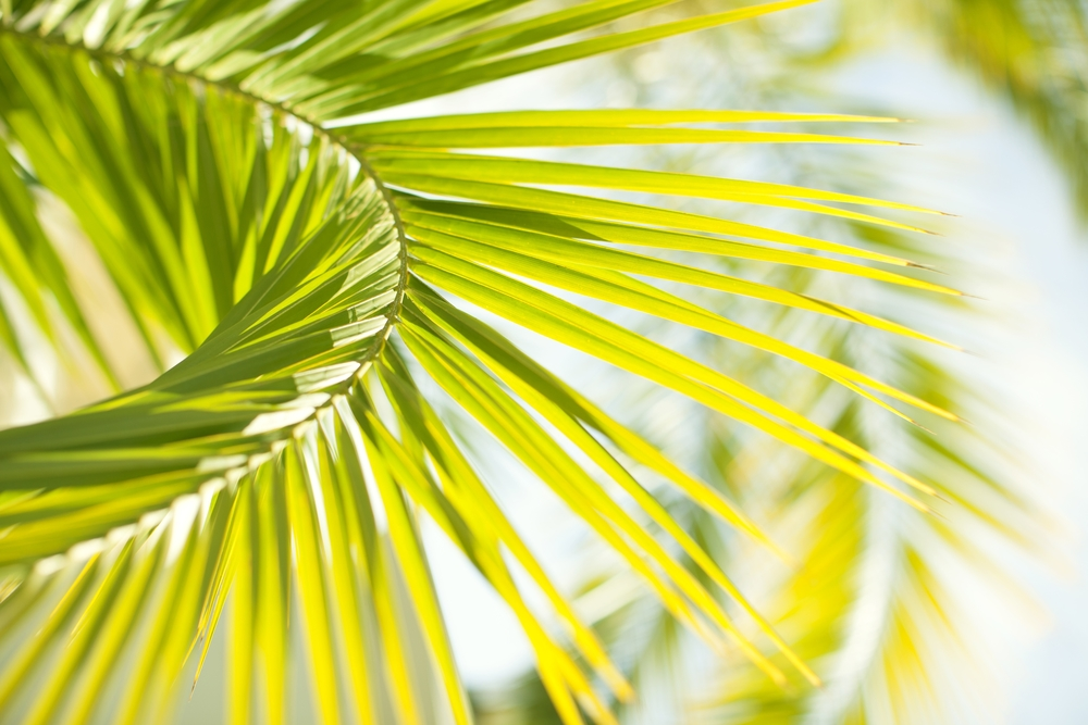 PalmCard_MG_6925.jpg