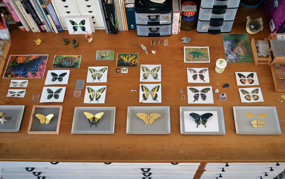 CABINET TOP WITH BUTTERFLY BROOCHES IN PROGRESS, along with color photocopies and photographs of the individual species. The photocopies of the actual wings are part of the documentation process that Freda follows to ensure accuracy of the intricate mosaic enameling on his butterfly brooches. The far left piece in progress is that of a moth. Photograph by David Freda.
