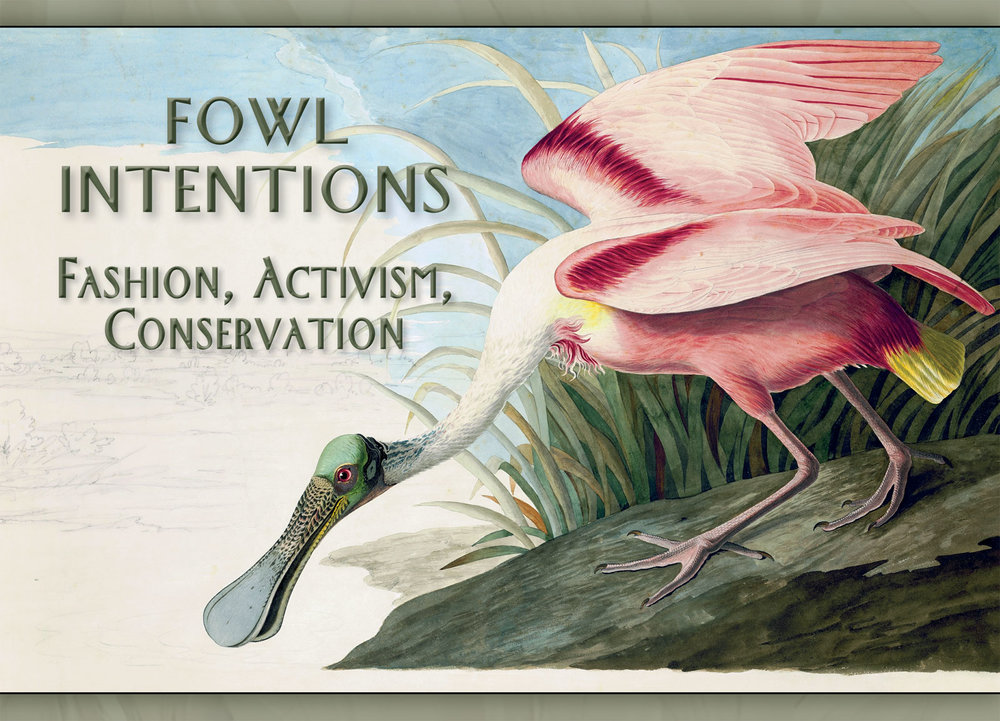 ROSEATE SPOONBILL WATERCOLOR ( Platalea ajaja ) by John James Audubon (1785-1851), circa 1831-32.  Purchased for the New-York Historical Society by public subscription from Mrs. John J. Audubon, 1863. Photographs courtesy of the New-York Historical Society.  Audubon admired these prehistoric-looking wading birds, the largest North American member of the ibis family. The beauty of their feathers brought the species to the brink of extinction by 1920. They survived after the Audubon Society dispatched wardens to protect them and urged the passage of strict conservation laws. Today, the Roseate Spoonbill is one of the great success stories of the conservation movement.