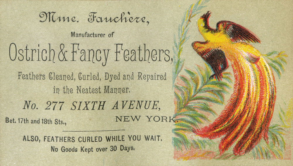 MME. FAUCHÈRE TRADE CARD, circa 1894. Numerous feather traders, importers and manufacturers were located in New York City. Many of the feathers incorporated into clothing and hats were imported from South America, South Africa and Africa. Game and plume hunters from Florida, Texas and Louisiana supplied many of the domestic feathers.