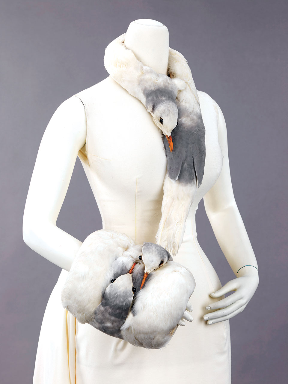 FOWL INTENTIONS:  ACCESSORY SET OF HERRING GULLS, feathers, silk, including muff and tippet, unidentified maker, USA, 1880–99.  Metropolitan Museum of Art, Brooklyn Museum Costume Collection, 2009.  This unusual muff and tippet, made with four adult Herring Gulls harvested during breeding season, demonstrates how accessory manufacturers exploited these birds.