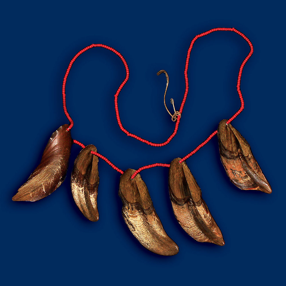 Kuna Jewelry:  NECKLACE, POSSIBLY OF COTYLEDONS of   Mora Oleifera  ; these are drift seeds found on the beaches of Central America.  Jewelry courtesy of the Hannaher Collection. Photograph by Robert K. Liu/Ornament.