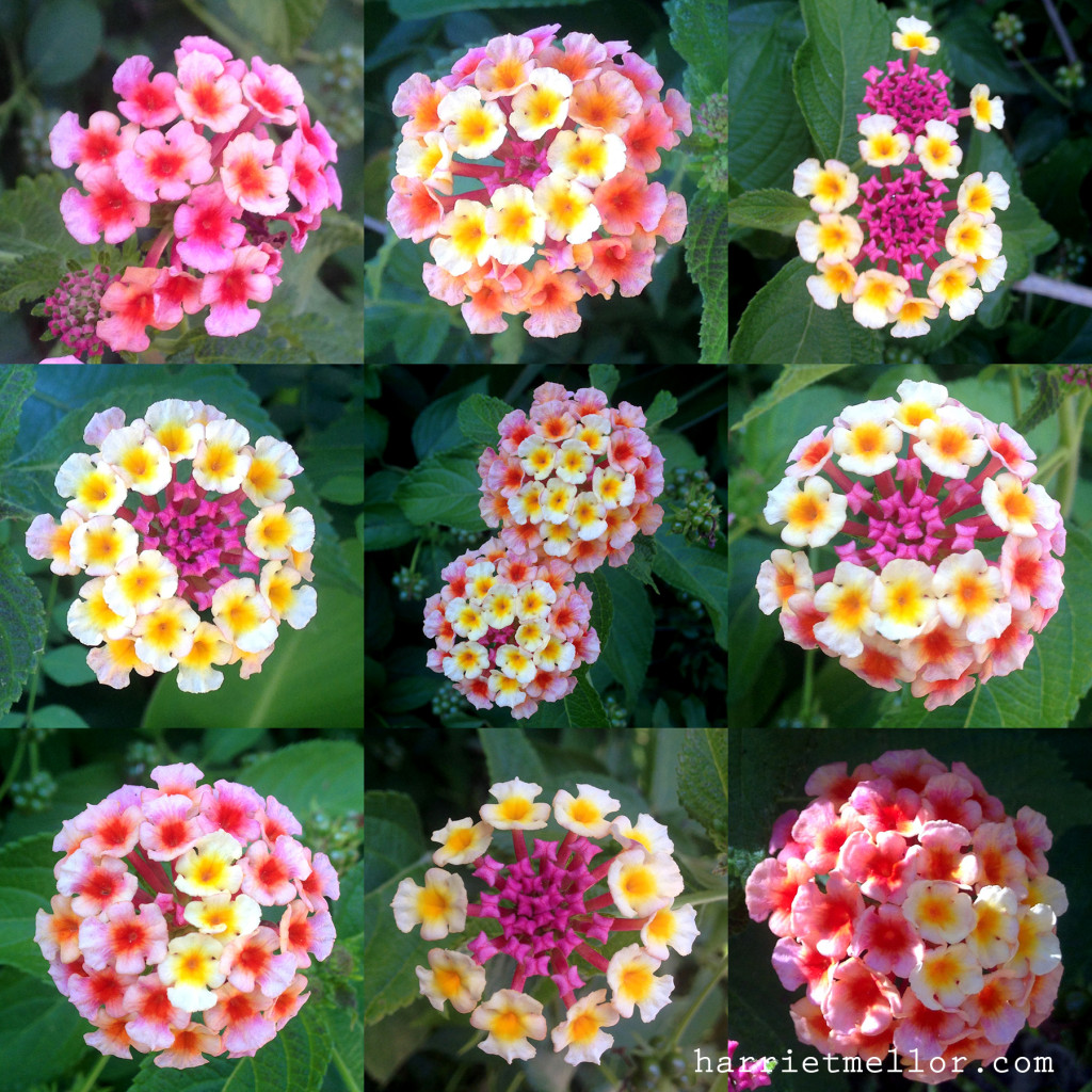 flower grid
