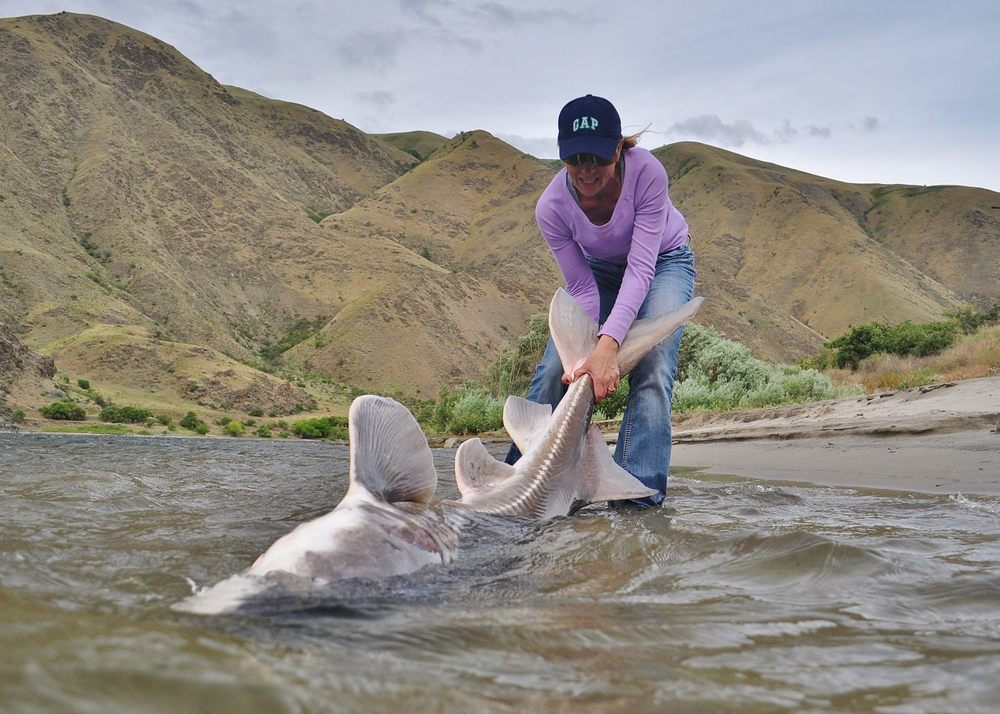 Snake River Sturgeon Fishing