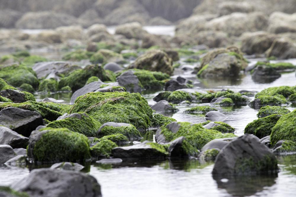 rocks 3.jpg