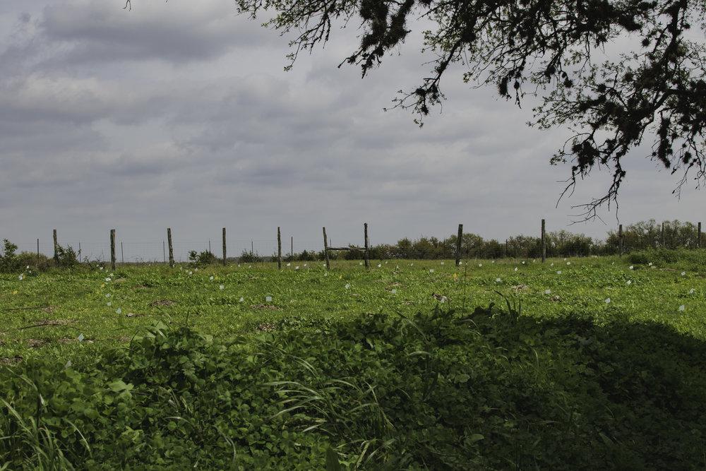 farm poles.jpg