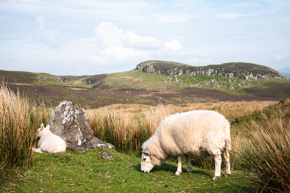 highlands 28.jpg