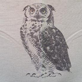 owlfeather.jpg