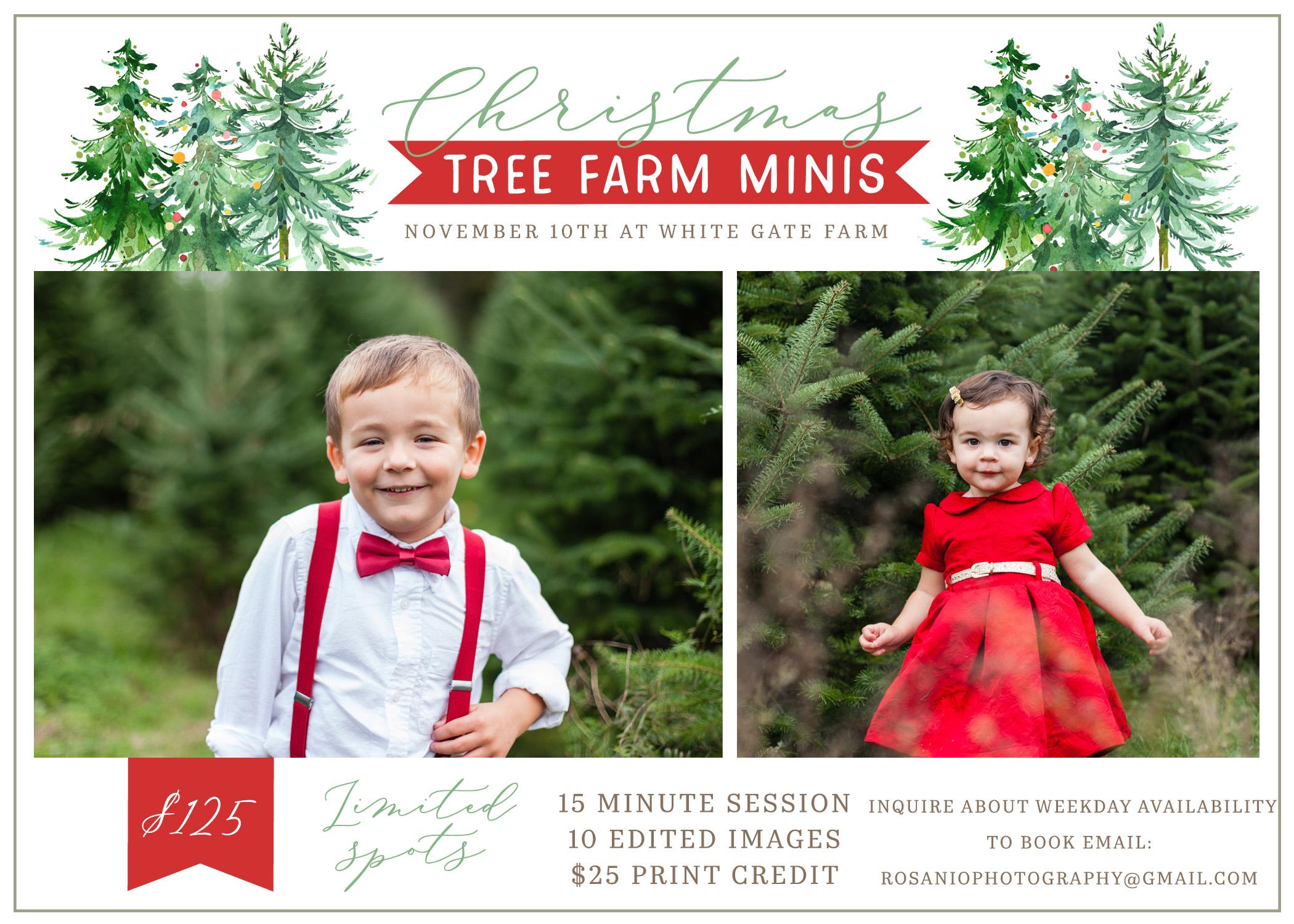 Christmas Tree Farm Mini Sessions Massachusetts And New Hampshire Family Photographer White Gate Christmas Tree Farm West Newbury Ma Rosanio Photography