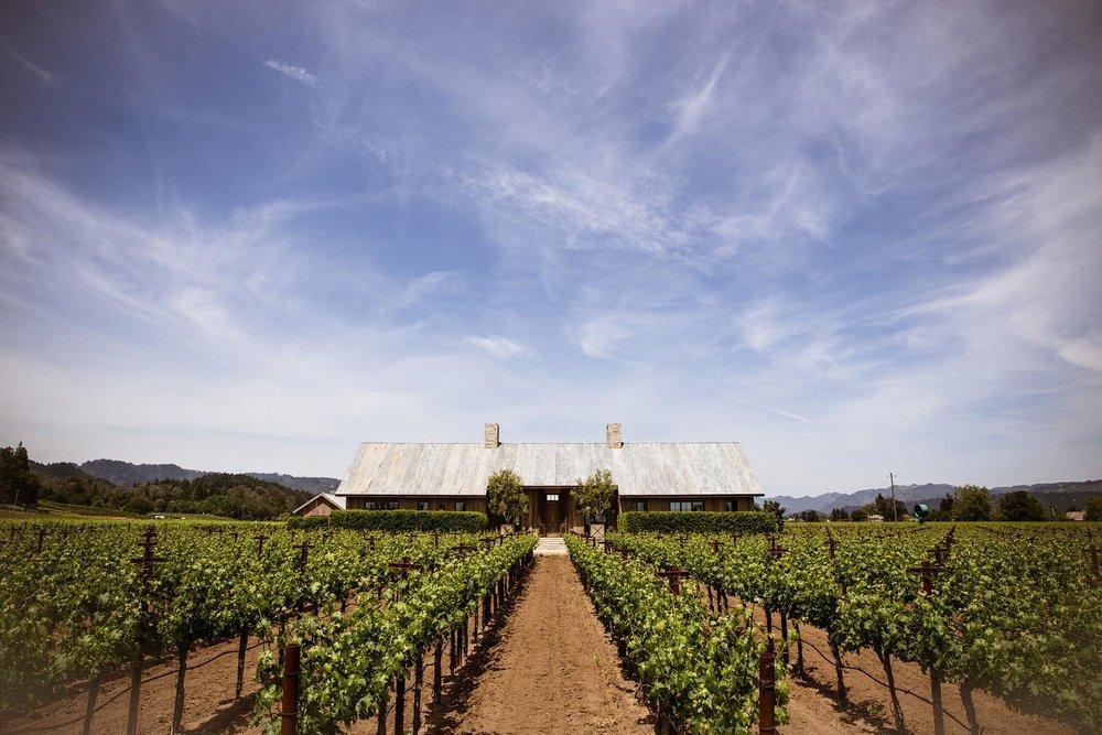 vineyard-pict.jpg