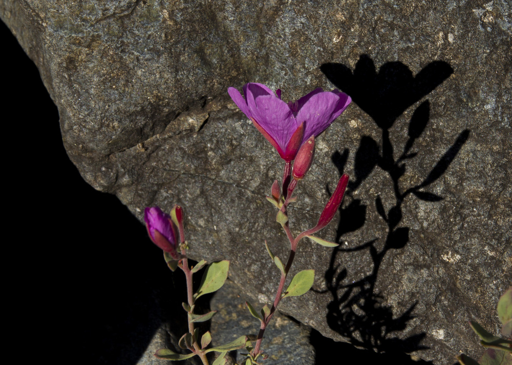 pink_flower (2).jpg