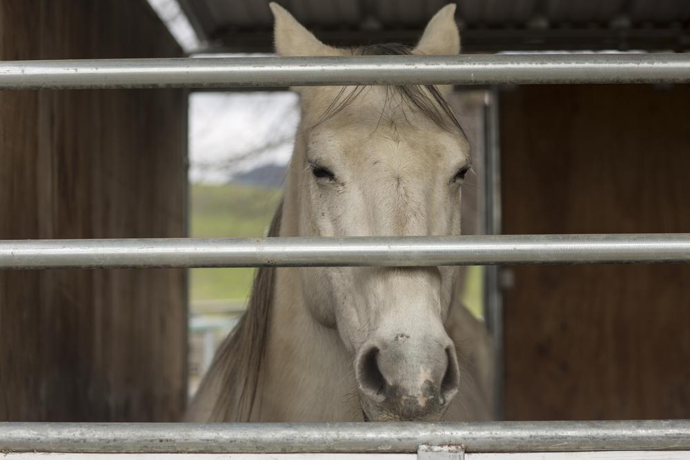 horse-2226.jpg