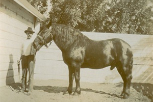 "Frederick Reinstein circa 1805 with his draft stallion ""Black Dick"""