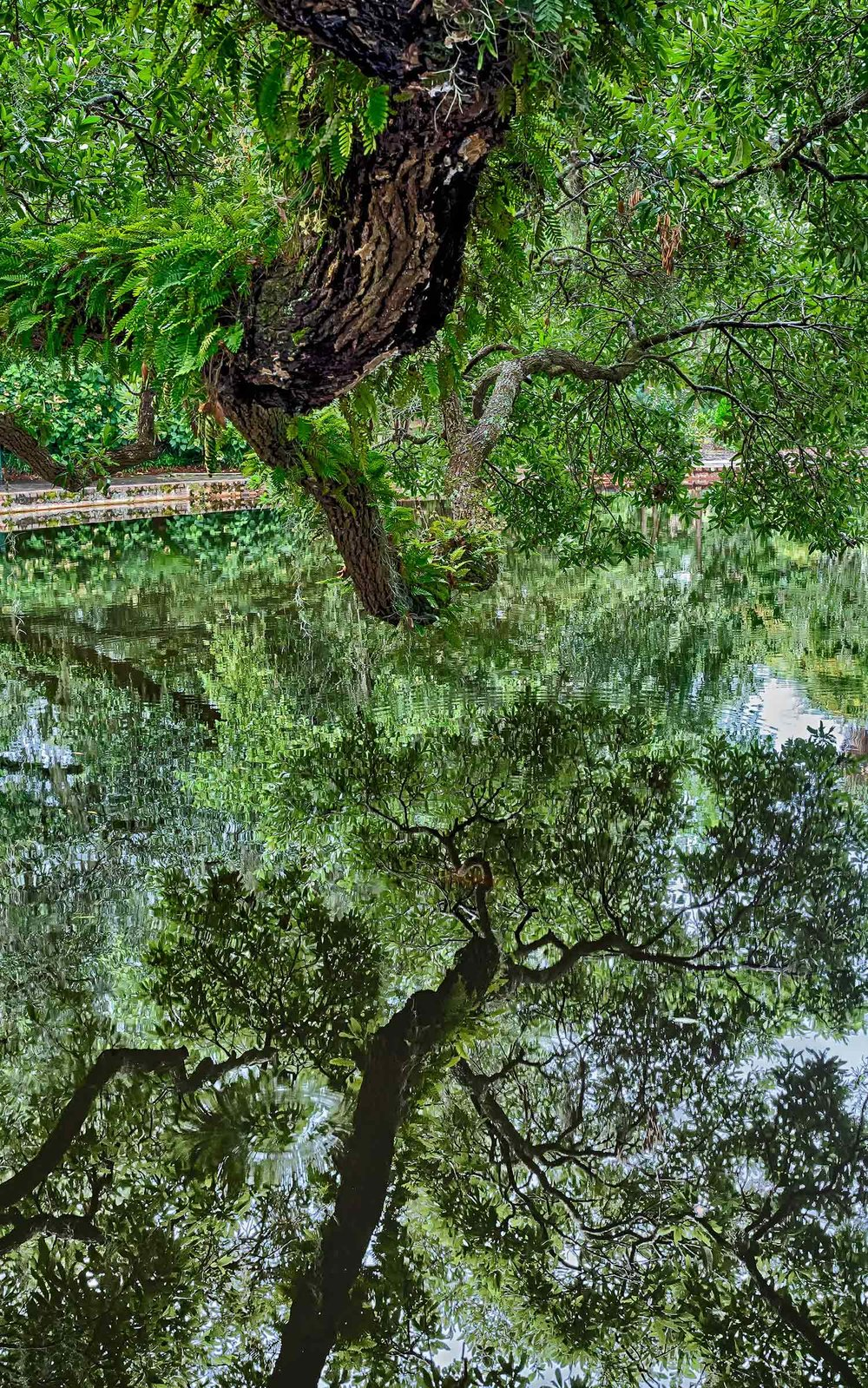 Tree Branch Reflection