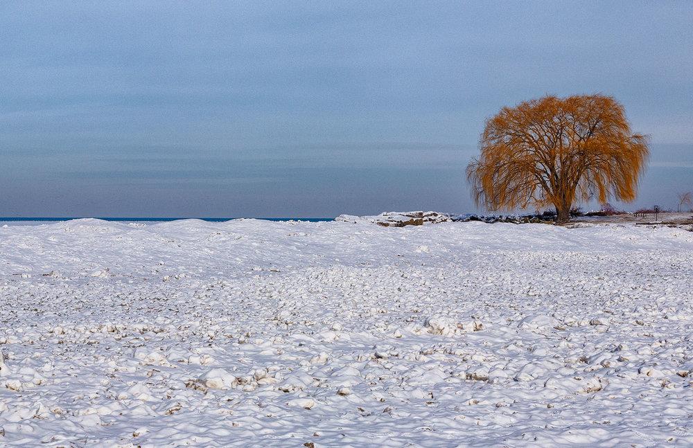 Tree of Edgewater Beach