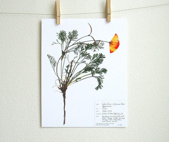 pressed plant print