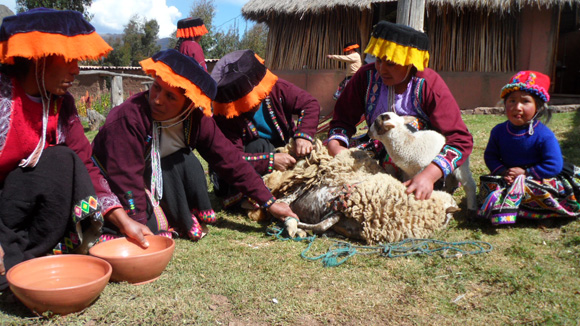 textiles-of-peru-4-sheep-shearing