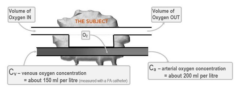 Illustration of Ficks principle.JPG