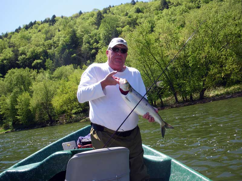Guided Shad Fishing on the Delaware River
