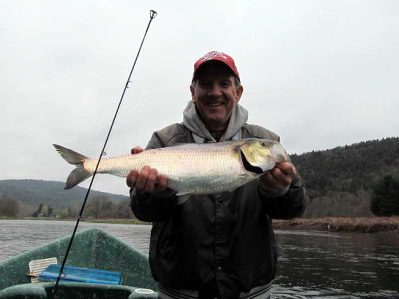Sweetwater Guide Service Shad fishing