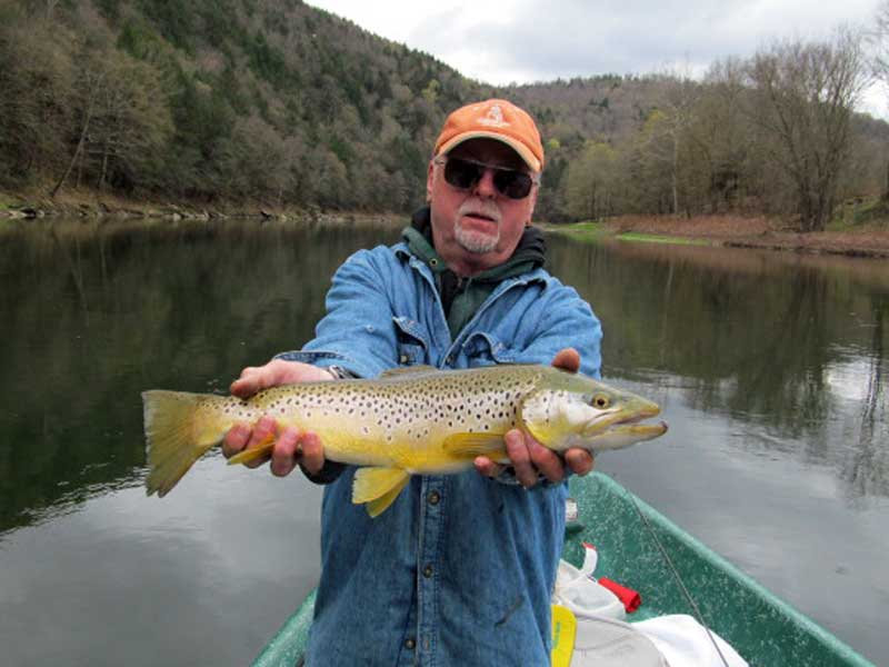 Brown trout fishing on the Delaware river with Sweetwater Guide Service