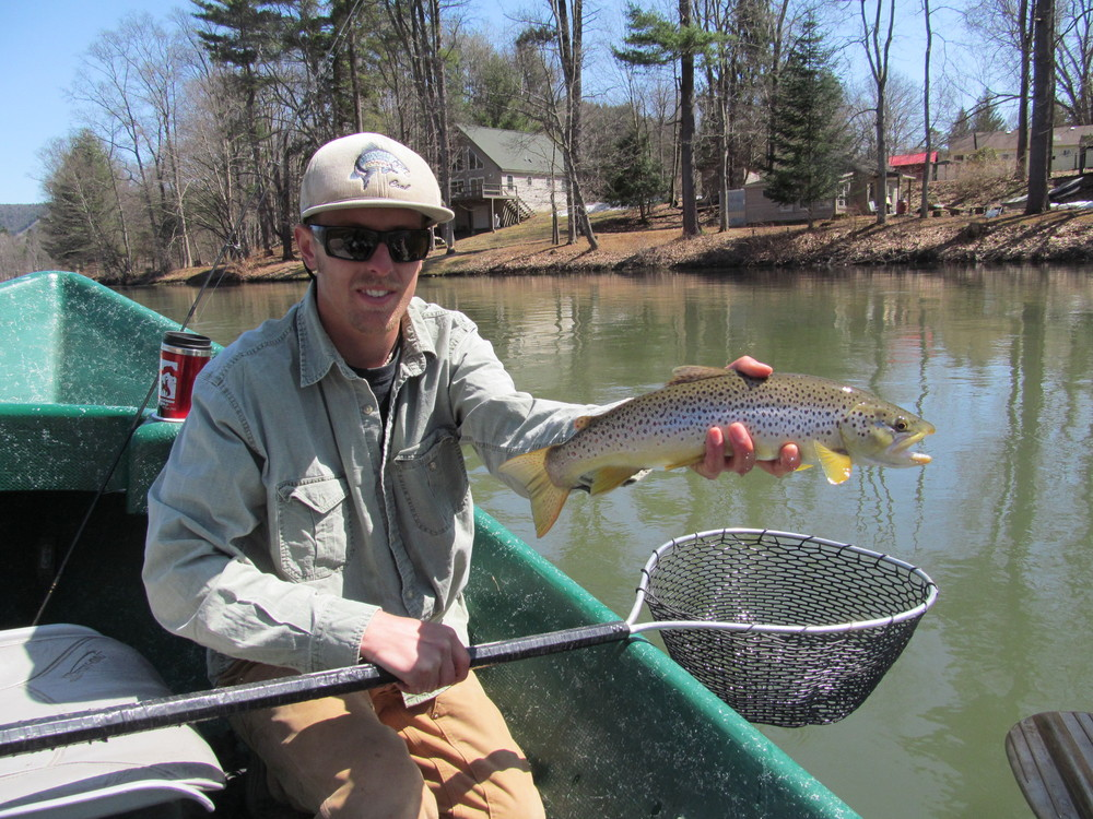 Healthy Brown trout on the Delaware!  Guide Evan P.