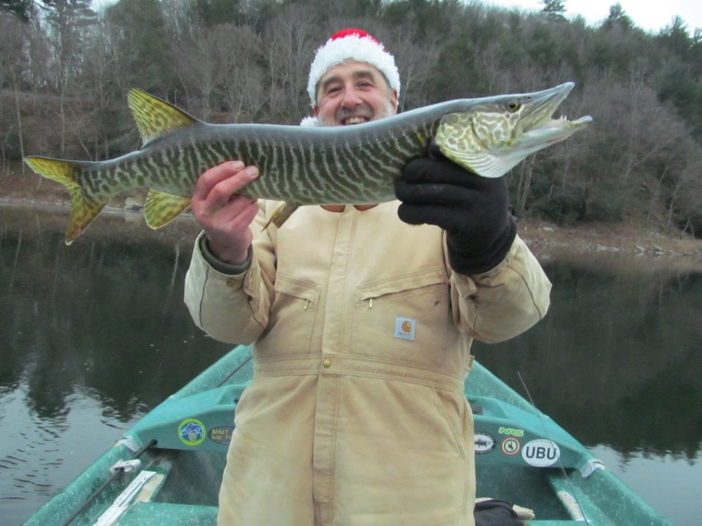 "28"" Tiger Muskie for Guide Mike P."