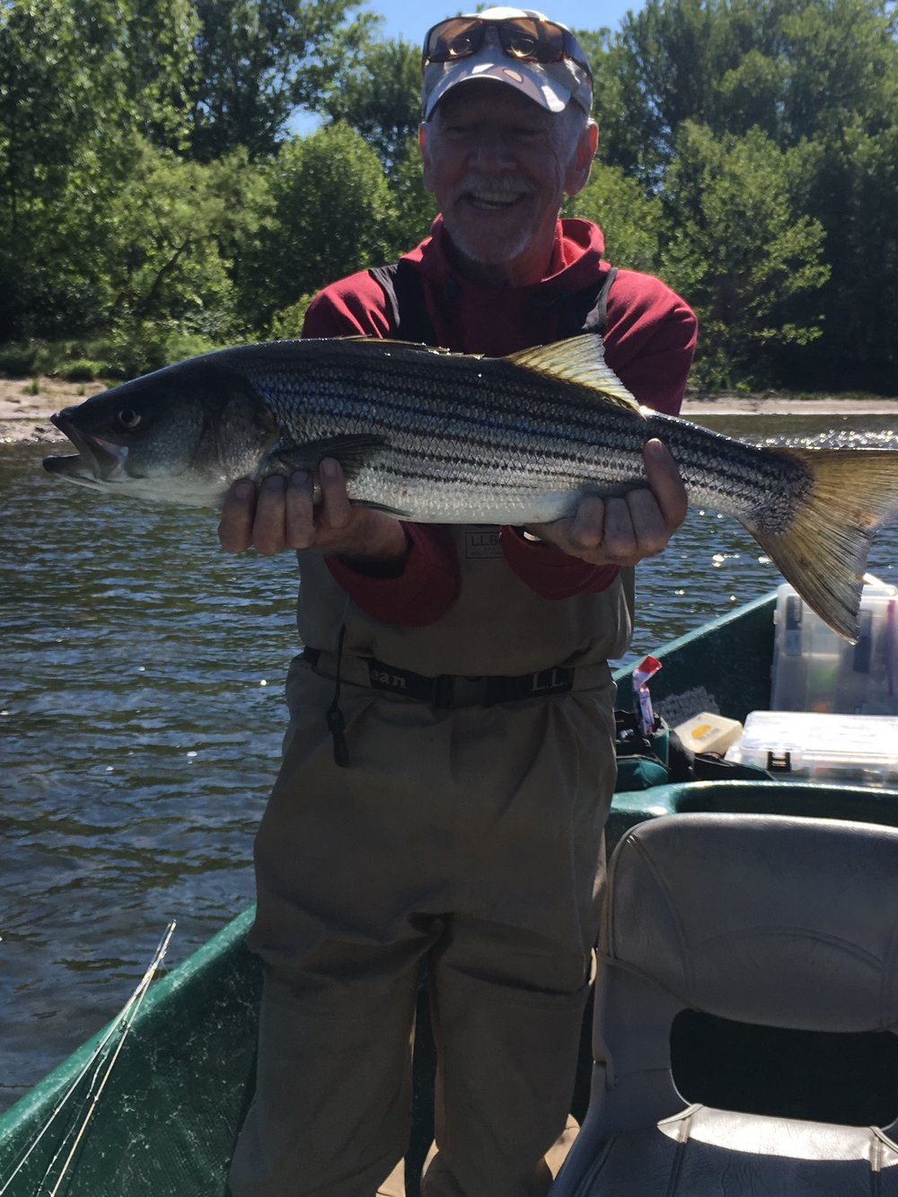 "Pete slams a 26"" Striper on 6lb test and barbless hooks, Nice work!"