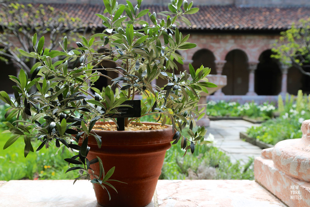 28.05.15 The Cloisters and the Met