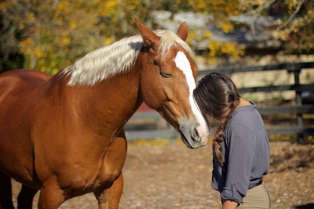 Strengthen Your Bond - Experience improvement in your horsemanship as you become more mindful of your horse's day to day activities and baseline. By investing time in logging your daily training, health and wellness activities, you will cultivate a deeper connection and synergy with your equine partner.