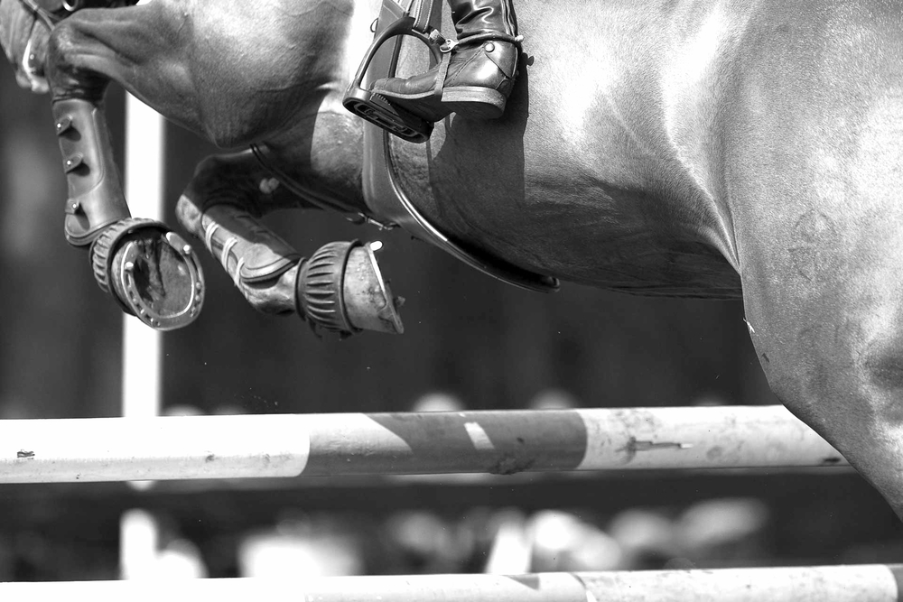 Horse Power    The Equine App for Performance Athletes   Learn More