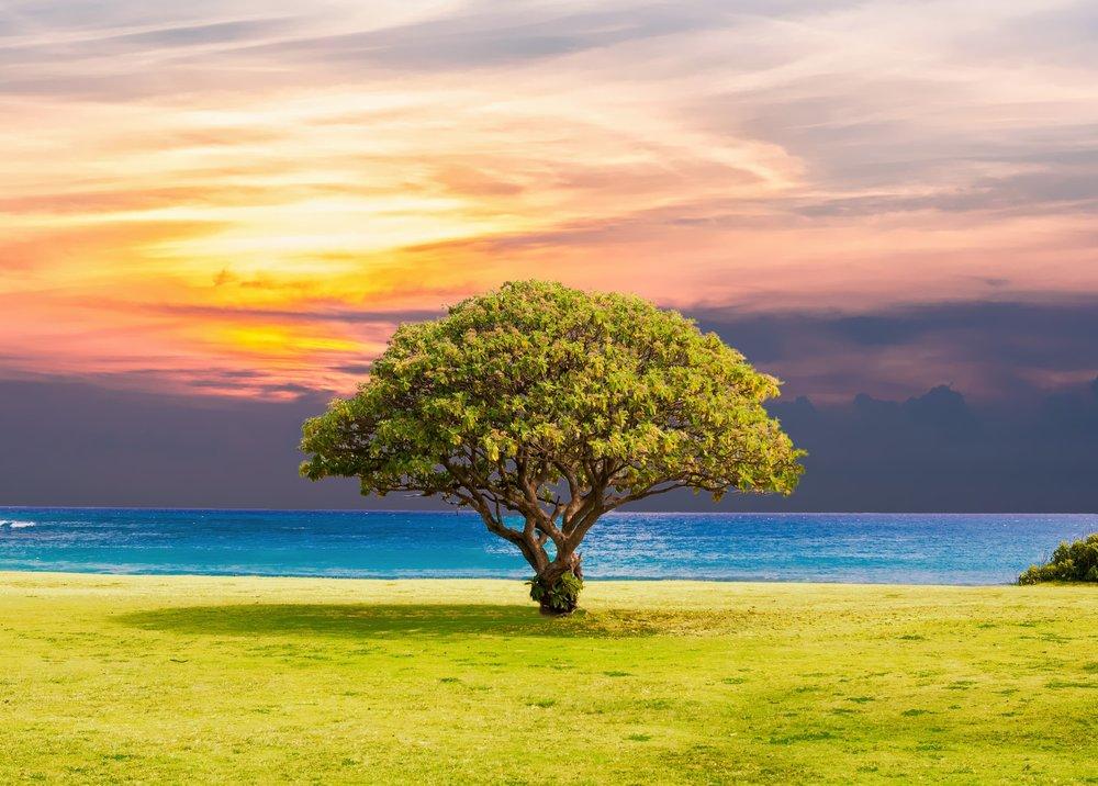 beach-clouds-grass-451855.jpg