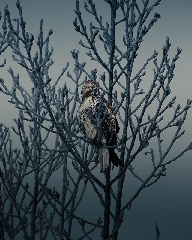 Sup.  #naturephotography #wildlifephotography