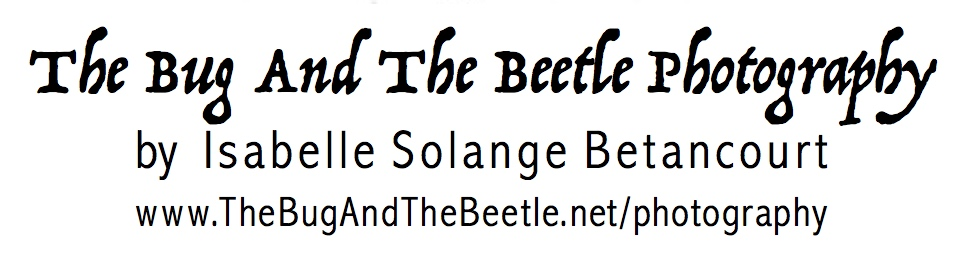 The Bug And The Beetle Photography Isabelle Solange Betancourt