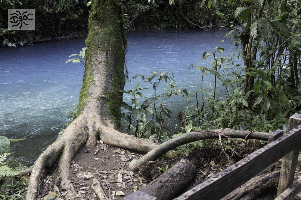 20170120 Costa Rica Rio Celeste-16.jpg