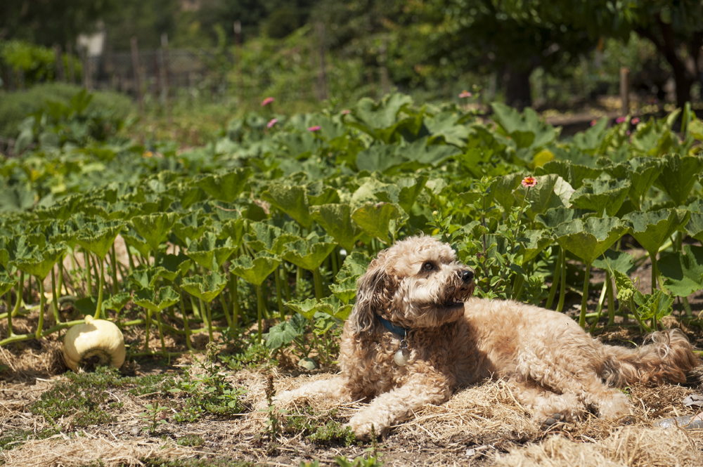 Farm photo 3