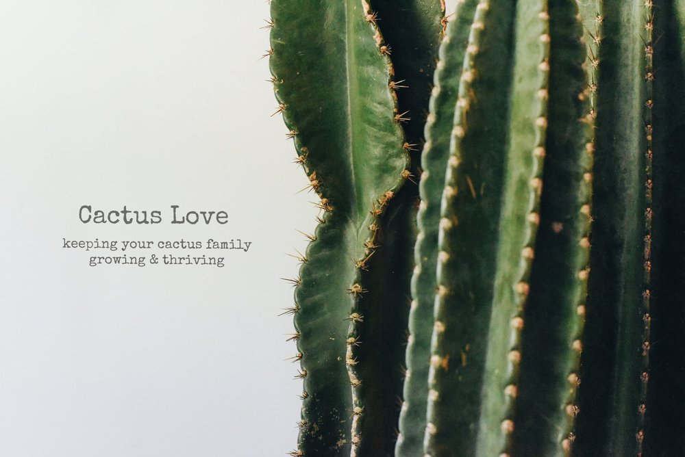 Cactus Love 101. Makers Unwound - collectors magazine