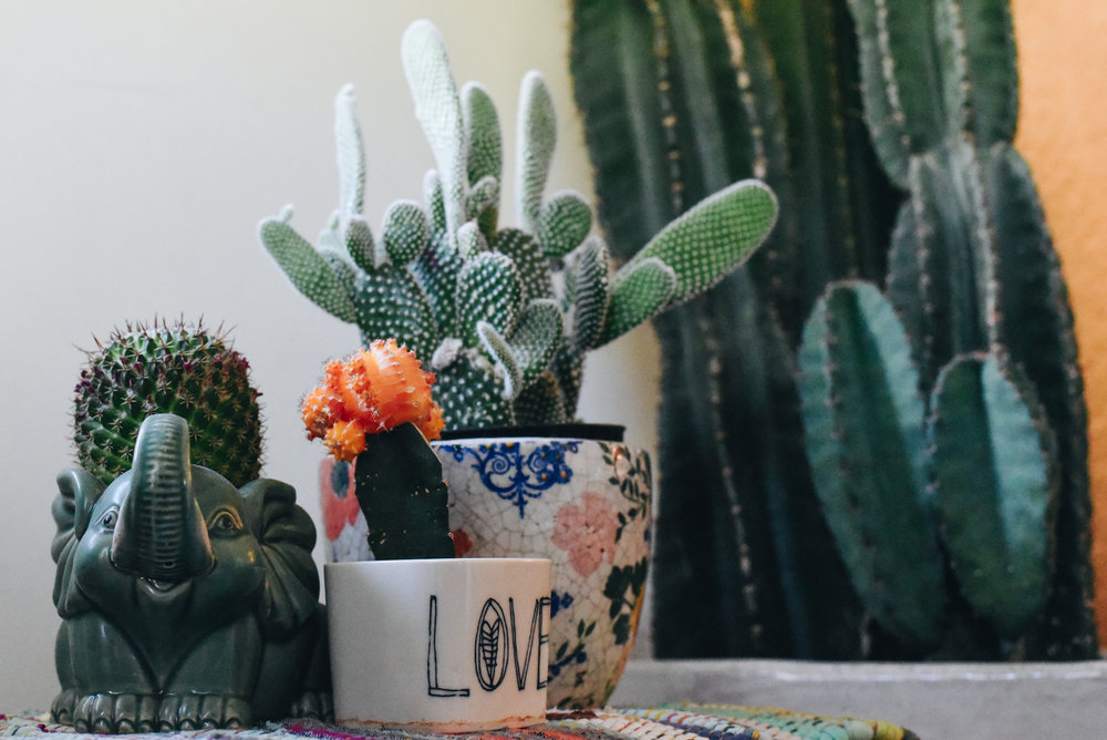 Cactus Care Basics; how to keep a cactus happy