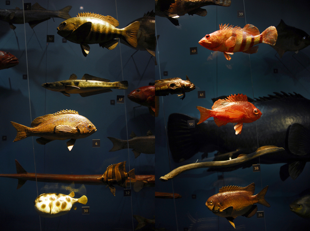 Fish Display SA Museum.jpg