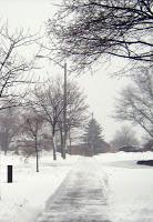 after_snow_storm.jpg