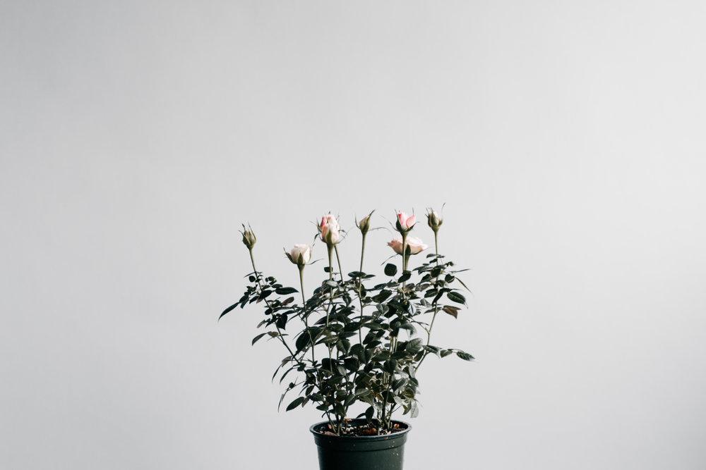 alexa-mazzarello-flowers