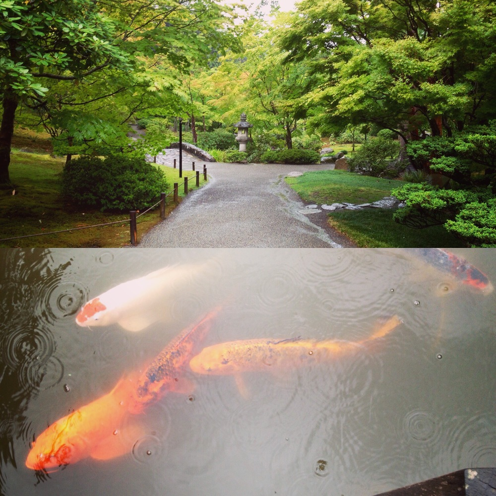 Rainy day walk at the Japanese garden. The koi don't mind the wet weather.