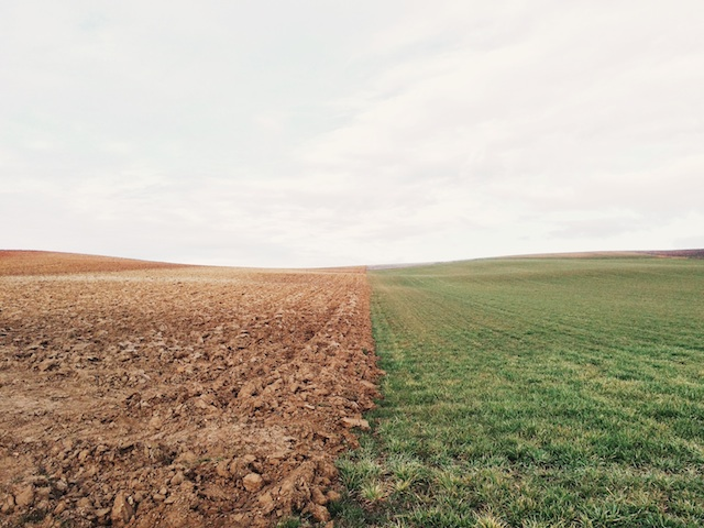 fields.jpeg