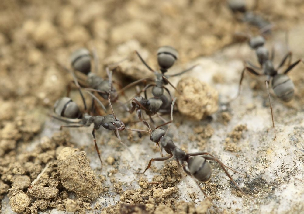 Spending an entire afternoon doing nothing but watching a colony of ants is really good for your well-being!