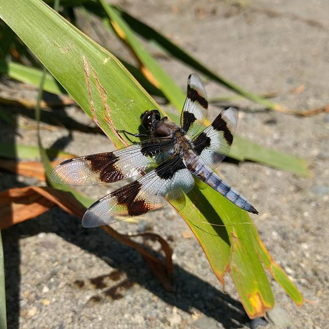 Bad ass #dragonfly. #nofilter