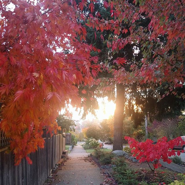 A glowing fall morning. I'm not usually an early morning person but this made it worth it the other day! #seattlefall